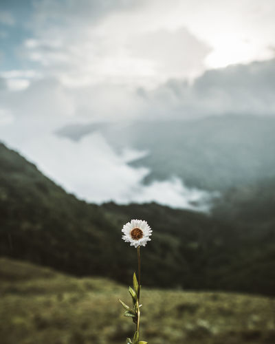Nature Nature Photography Beauty In Nature Close-up Cloud - Sky Day Flower Flowering Plant Focus On Foreground Freshness Land Nature Nature_collection Naturelovers Naturephotography Outdoors Photo Photography Photooftheday Plant Scenics - Nature Sky