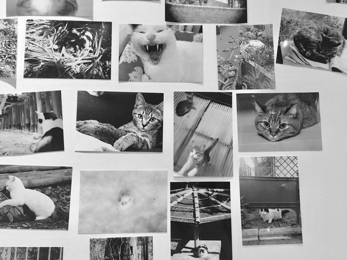 😍 Photograph Picture Frame Collage Multiple Image Cat Cats Cat Lovers Animal Themes Domestic Animals Pets No People Mammal Indoors  Nature EyeEm Nature Lover Street Photography Streetphotography Streetphoto_bw Black & White Blackandwhite Photography Black And White Enjoying Life Blackandwhite Day Photography