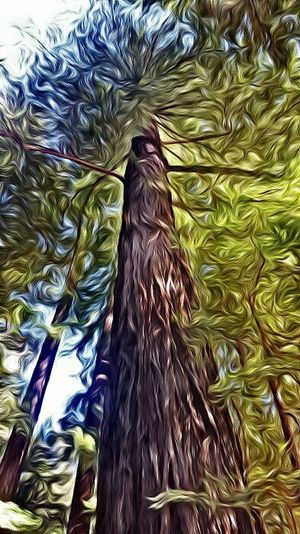 Edited a Redwoodtree. Edited Pics MyPics Edited My Way Editedbyme Funapps Redwood Trees Greenery Artistic Photography Artisticeye Check This Out Hello World Nature_collection Naturelovers Editjunkie Editing Feeling Artistic Showcase July