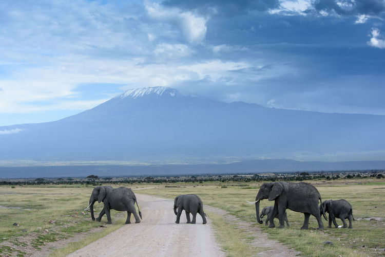 Elephants on landscape against sky