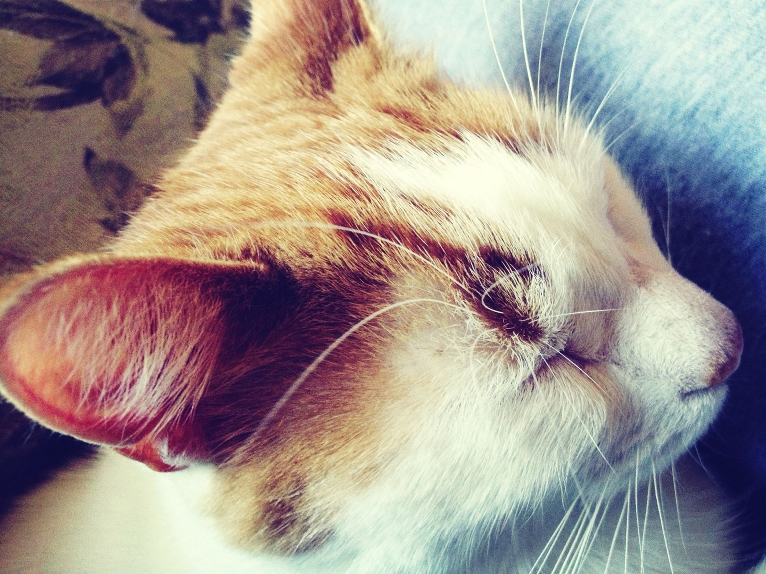 pets, domestic animals, mammal, one animal, animal themes, dog, indoors, close-up, relaxation, domestic cat, sleeping, animal head, feline, eyes closed, cat, resting, whisker, animal body part, lying down, home interior