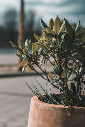 Close-up of small potted plant against wall