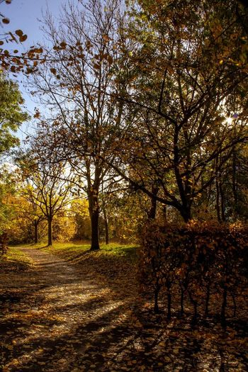 Autumn Colour Tree Plant Growth Tranquility Tranquil Scene Nature Beauty In Nature Sunlight No People Sky Scenics - Nature Land Autumn Day Field Outdoors Branch Park Change Non-urban Scene