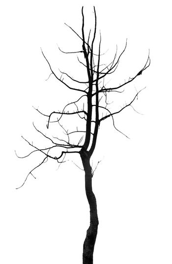 Silhouette tree single,isolated on background Landscape Silhouette Sky Sun Sunset Tree Twilight Black White Isolated Illustration Branch Oak Background Trees Nature Plant Season  Drawing Outline Outdoor Autumn Environment Organic Shape Icon Art Design Winter Abstract Pattern Beautiful Image Spring Wood Bare Forest Trunk Grass Growth Seasonal Fantasy Aspen Birch Bareness Single Alone Dry Arid
