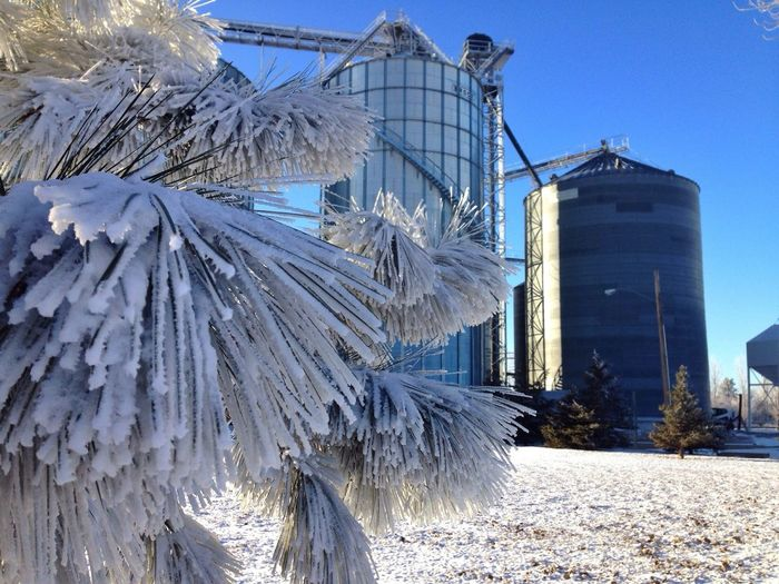 Frosted Trees & Grain Silos