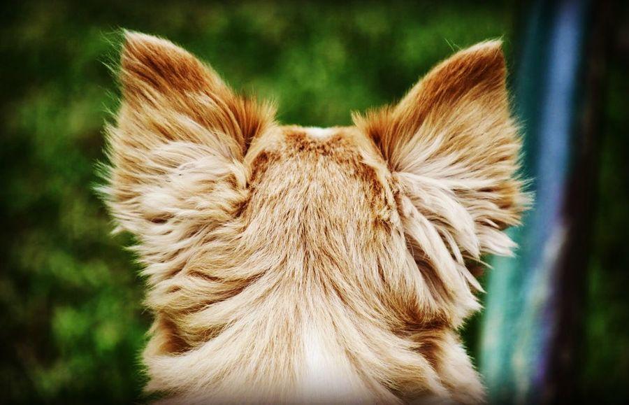 Close-up One Animal Mammal Focus On Foreground Animal Themes Animal Animal Body Part Pets Domestic Animals Animal Head