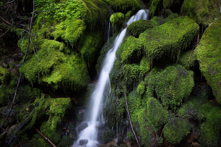 Mossy, Green
