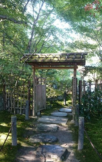 Japanese Culture Japanese Traditional Japan Photography Japanese Temple Japanese Garden Japan Japanese Photography Tree Wood - Material Wooden Post Protection Gate Sky Wooden Growing
