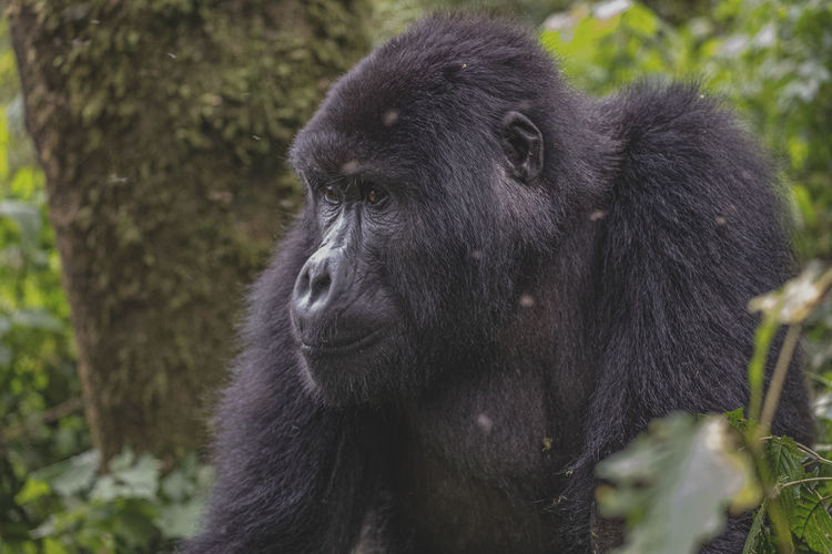 Close-up of a monkey