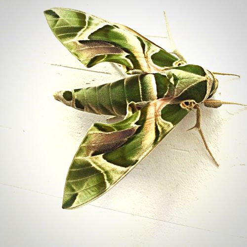 Amazing butterfly 😳 First Eyeem Photo