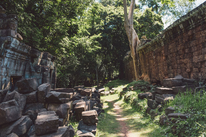 Siem Reap Cambodia Angkor Tree Plant Architecture Built Structure Nature Solid Wall Day No People History Building Exterior Sunlight Ancient Old Outdoors Stone Wall Forest Rock The Past Direction Ancient Civilization Ruined