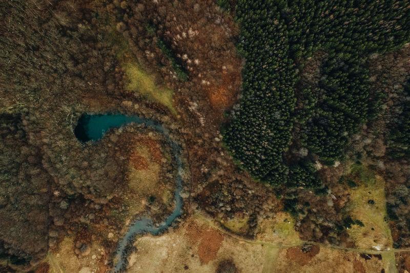 Full frame shot of dead fish in sea