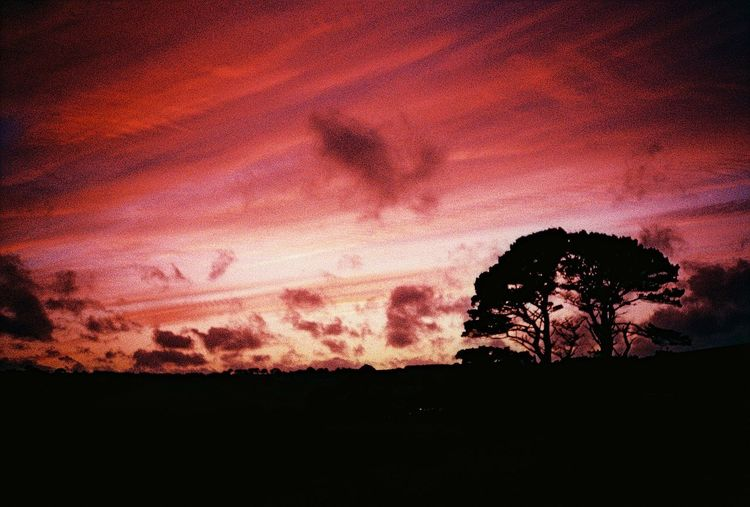 Clouds Grain Sky Sky And Clouds Sunset Sunset With Tree Tree Tree Sunset Trees Wind Xpro Landscapes With WhiteWall Lost In The Landscape