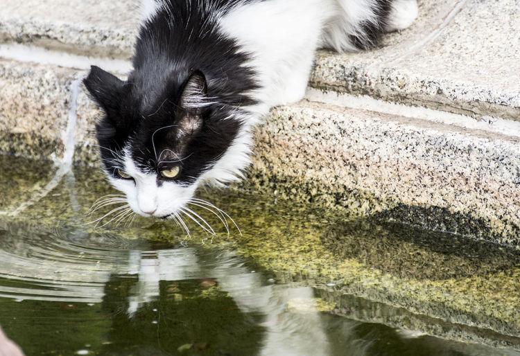 Parque del Retiro. Madrid Cat♡ Cats Of EyeEm Agua, Tierra Mar Y Cielo Reflection Drinking Gato, Cat, Eyes Mammal Mamífero One Animal Animal Eye Cat Animal Face