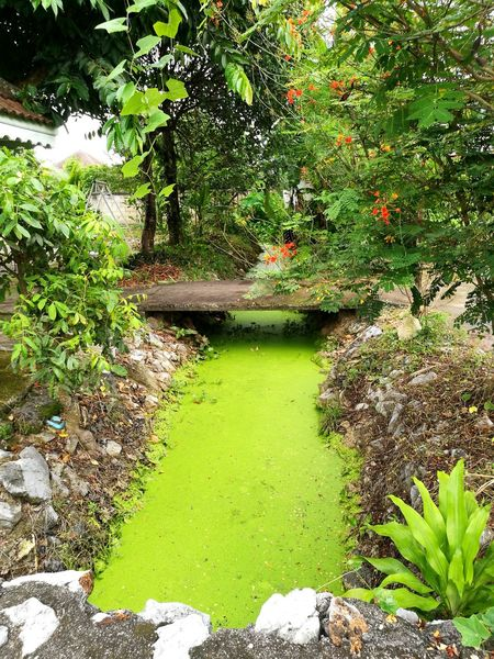 Green Color Nature Water Growth Outdoors Day No People Plant Beauty In Nature Tree Bridge Bridge - Man Made Structure Creek Knead EyeEmNewHere