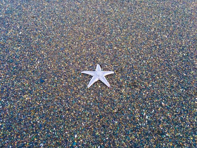 Asteroid Asteroidea Fivefingers Sandstar Seastar Starfish  Starfish At Beach Star Shape Beach Outdoors No People Walking Around EyeEmBestPics Nature From My Point Of View Landscapes EyeEm Best Shots Moments Sea