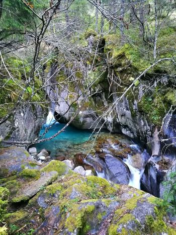 Klamm Wilder Bach Kaltes Wasser No People Outdoors Eyemphotography Stones Likeit Water Tree Forest