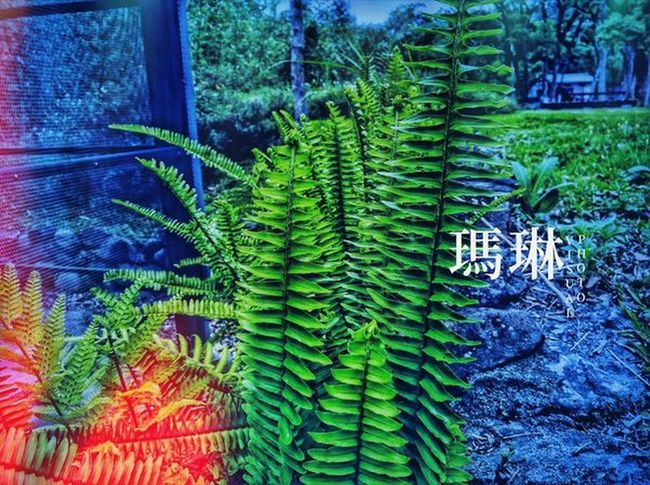 Outdoors GreenGreenGreen GreenAndBlue  Colorful Streetphotography Colors Nature Tree Backgrounds Leaf Full Frame Fern Close-up Plant Green Color Green Young Plant