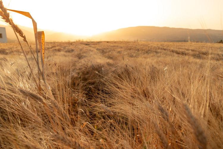Land Sky Field