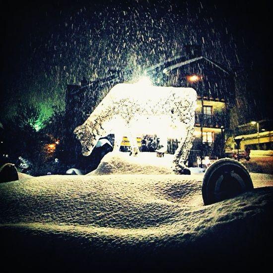 Vaca Sagrada De La Neu