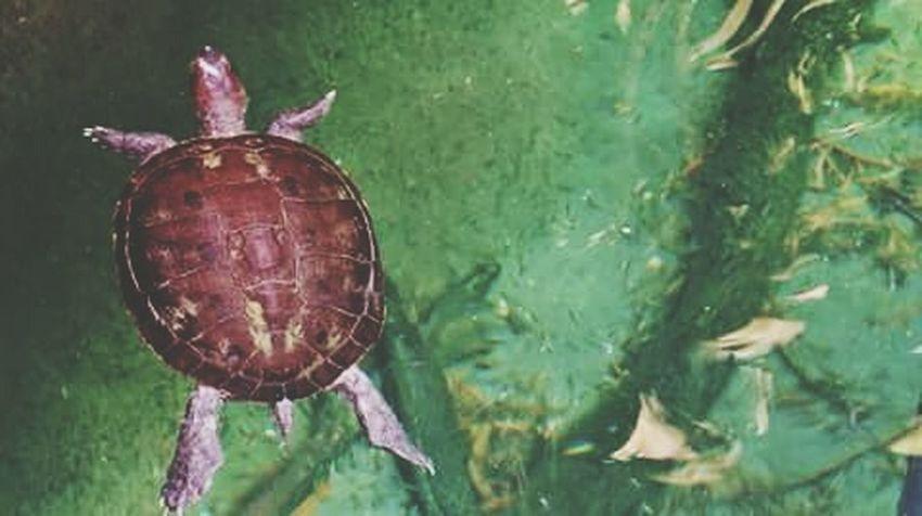 Jacksonville Zoo Turtle Turtle Love TurtlePower