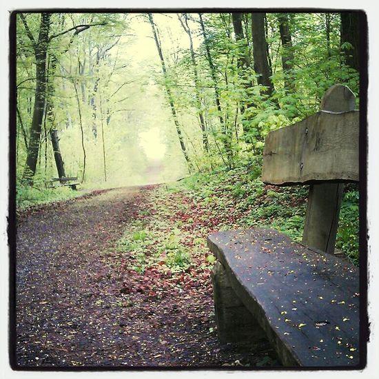Frühling Forest Nature_collection Philosophenwald