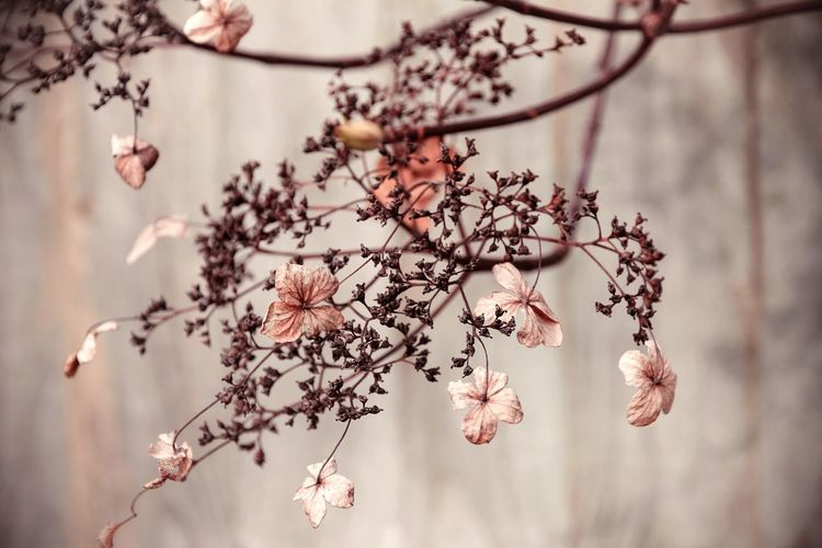 Dried Flowers On Branch