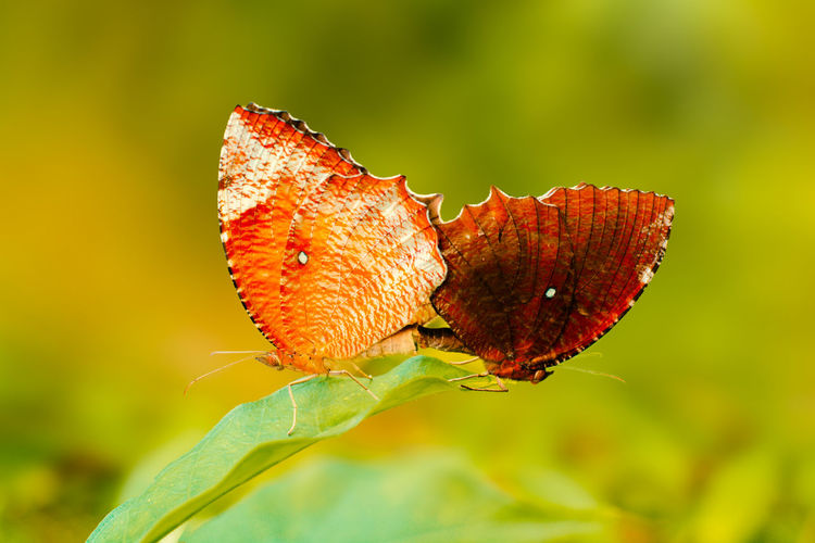 A New Beginning Leaf Butterfly - Insect Flower Insect Red Social Issues Close-up Animal Themes Plant Green Color Animal Wing Butterfly Wild Animal Moth