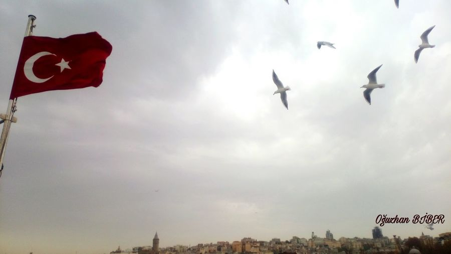 Ay yıldız.. Flag Turkishflag Relax Relaxing Traveling Travel Istanbul Galata Sea And Sky Clouds And Sky Cloud - Sky Day Sky Architecture City Nature Freedom Landscape Light And Shadow Ships Horizon Over Water Cityscape Galata Tower Turkey Birds