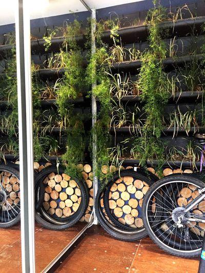 Green Bike Wheel Wheels Wood Curitiba, Brazil Curitiba Curitibacool Plants 🌱 Plants
