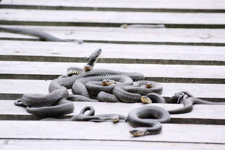 Snake Nature Sunbathing Sunbathing☀ EyeEm Nature Lover EyeEm Nature Lovers Nature_collection Naturelovers OpenEdit Hello World