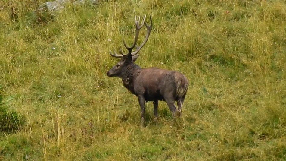 Wildlife Photography Animal Themes Animal Wildlife Animals In The Wild Deer Rutting Deers Nature Wildlife