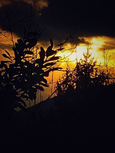 Tree Silhouette Sunset Nature Back Lit No People Plant Beauty In Nature