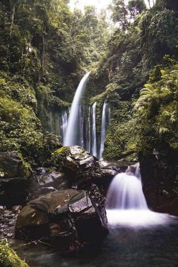 Stunned by its sounds and view! Nature Beauty Nature Photography Waterfall In The Jungle Tiu Kelep Waterfall Photography Waterfall #water #landscape #nature #beautiful Longexposure SONY A7ii Water Motion Long Exposure Tree Waterfall Nature Plant Flowing Water Beauty In Nature Scenics - Nature Blurred Motion First Eyeem Photo