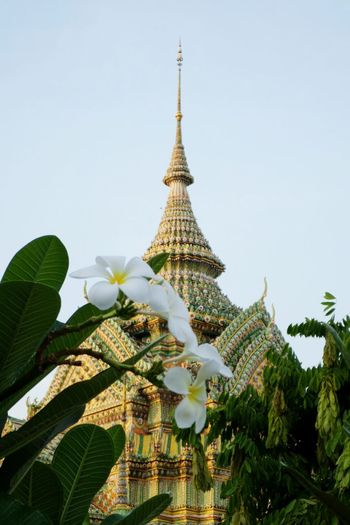 Thai Temple Photo in Wat Pho. Flower Beauty In Nature Day Plant Sky City Wat Tradition History Travel Backgrounds Thailand Photos Thai Temple Photo Thailand Bangkok Thailand. Wat Thai Tods Tada Thai Style Outdoors Green Color Buddha Statue Gold Bangkok Thailand..