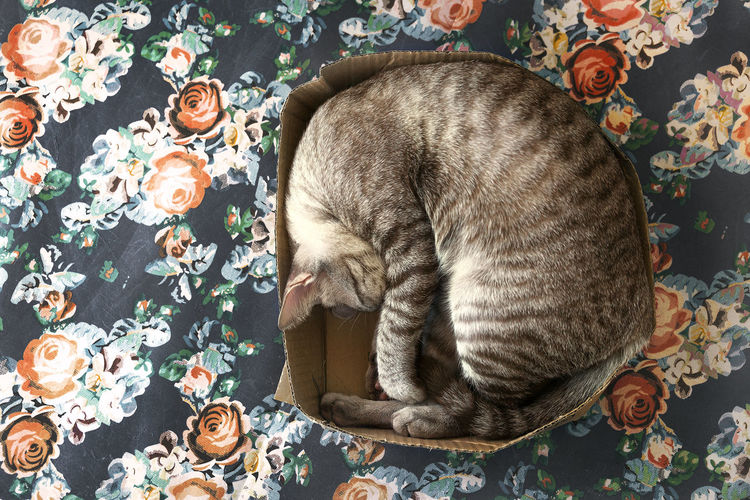 Animal Themes Close-up Comfortable Day Domestic Animals Domestic Cat Eyes Closed  Feline Flower High Angle View Indoors  Lying Down Mammal No People One Animal Pets Quilt Relaxation Rose - Flower Sleeping