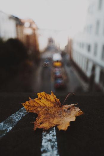 Autumn Focus On