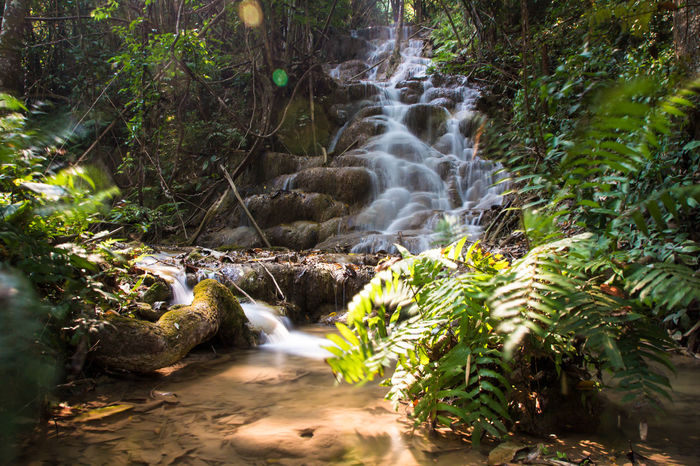 Chiang Rai, Thailand Beauty In Nature Blurred Motion Chiangrai Day Forest Long Exposure Moss Motion Nature No People Outdoors Plant Power In Nature Pu Kang Waterfall River Rock - Object Scenics Tree Water Waterfall