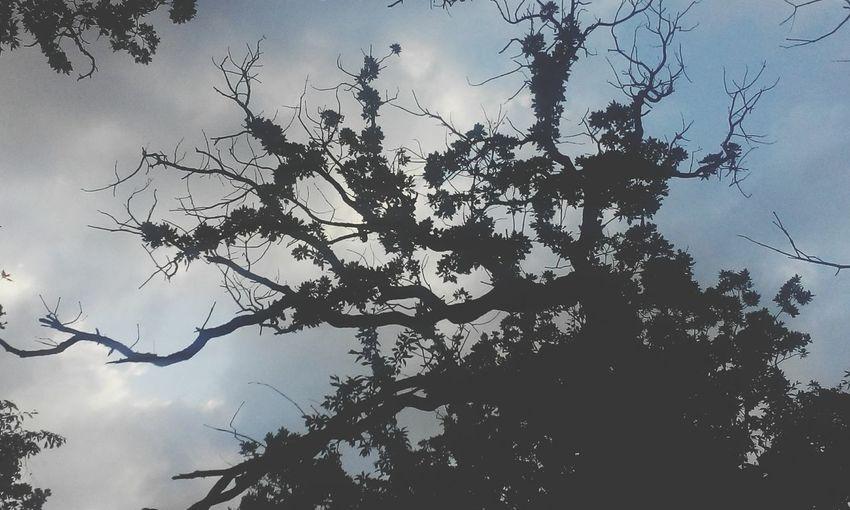Природа Лиманчик
