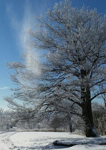Winter Tree Tree Nature Nature_collection Winter Winterscapes Snow Blue Sky Snow Covered Trees Ice Covered  Breathtaking View
