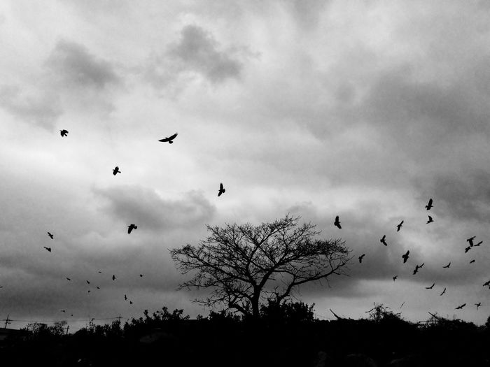 Low angle view of birds flying over cloudy sky