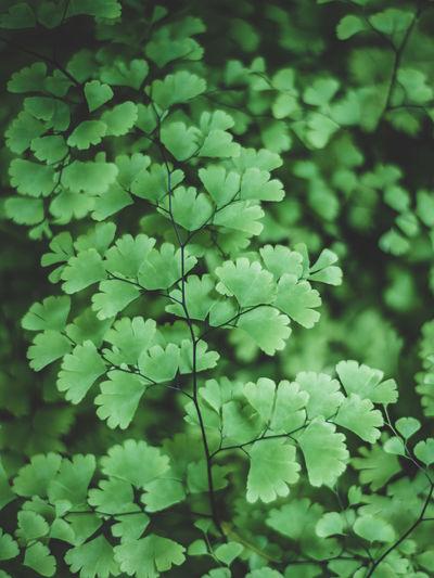 Green leaves in