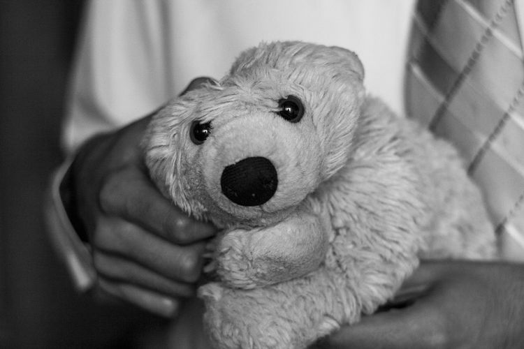 Thinking Bear Mammal Toy Toy Animal Animal Toy Pets Domestic One Animal Human Hand Indoors  Close-up Finger Pet Owner Focus On Foreground Real People Canine Bear Polar Bear Bear Toy Toy Bear Grayscale Puppet