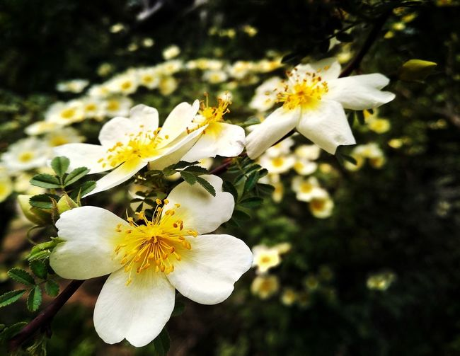 Flowers view Flower Head Flower Tree Branch Springtime Petal Blossom White Color Pollen Close-up