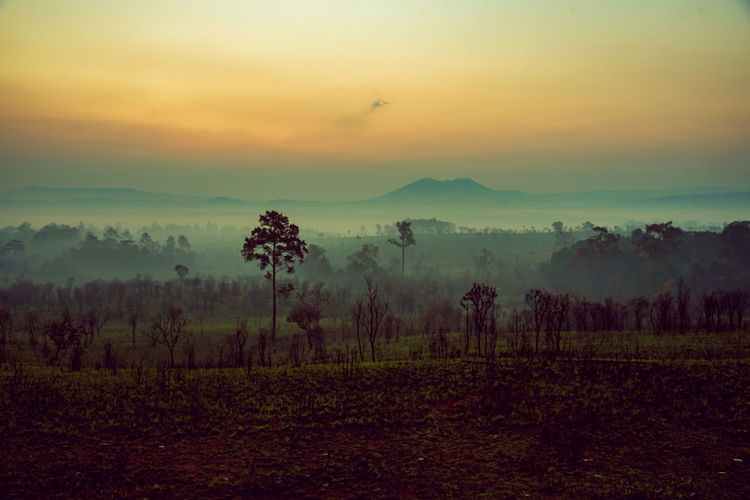 Mountainous terrain and landscape in the morning with mist in winter, dense foggy national park and humid and cold climate. Sky Tranquility Tranquil Scene Beauty In Nature Sunset Scenics - Nature Environment Fog No People Plant Landscape Non-urban Scene Land Nature Idyllic Cloud - Sky Field Orange Color Tree Hazy