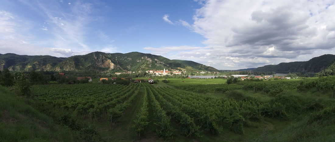 view over the vineyards of wachau to Dürnstein. Austria Vineyards  Wachau Agriculture Beauty In Nature Cloud - Sky Crop  Day Farm Field Green Color Growth Landscape Mountain Mountain Range Nature No People Outdoors Rural Scene Scenics Sky Tea Crop Tranquil Scene Tranquility Tree