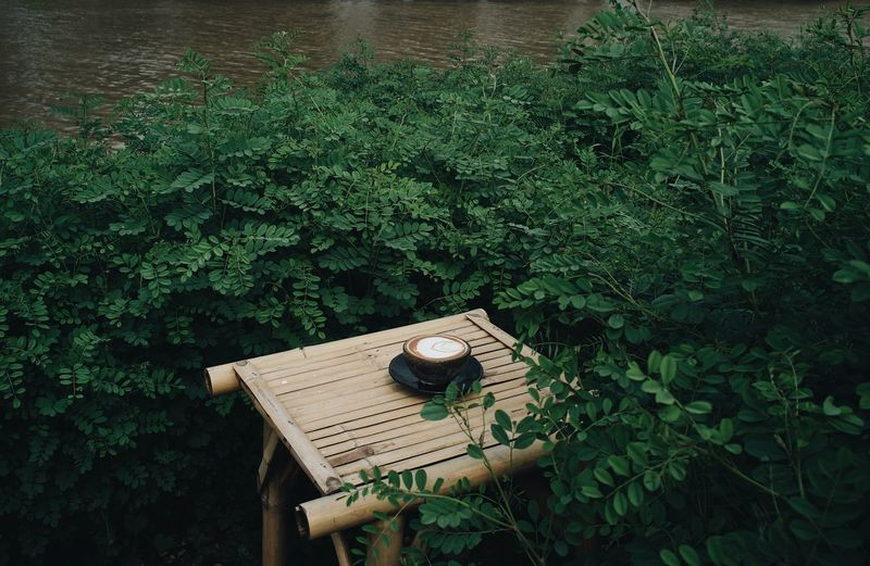 High Angle View Of Coffee On Table Amidst Plants
