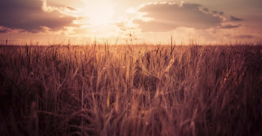 Montana's sweeping landscape Montana Fields Sunset Landscape