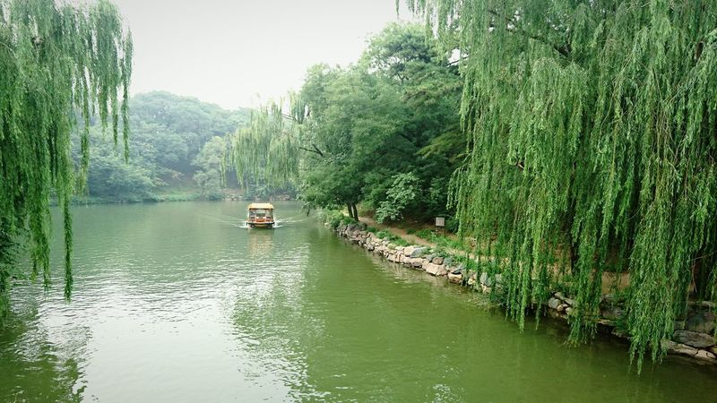 Tree Mode Of Transport Transportation Nature Green Color Nautical Vessel Outdoors Water Beauty In Nature No People Day Tree Chinese Garden Yangzhou China