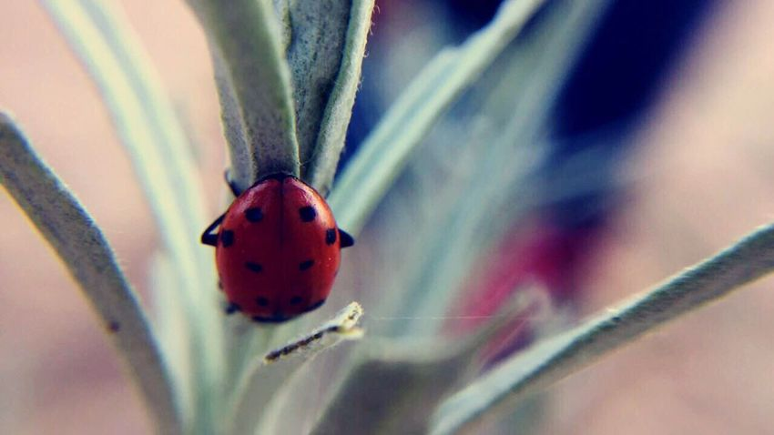 The Great Outdoors - 2017 EyeEm Awards Ladybug Insect Tiny Nature Outdoors The Great Outdoors - 2017 EyeEm Awards